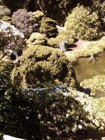 Highlight for album: SF Japanese Gardens